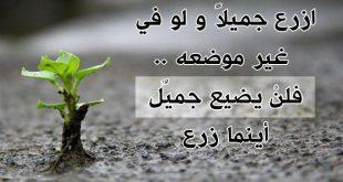 صورة ازرع جميلا ولو في غير موضعه , قصة معبرة عن فعل الخير