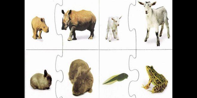 صورة كيف تنمو الحيوانات وتتكاثر , ماهو التكاثر الجنسي والتكاثر اللاجنسي