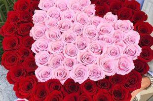 صورة اجمل الصور ورد في العالم , تعرف على اشهر انواع الورود